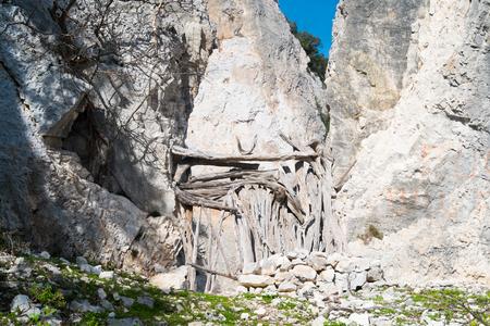 rocky mountain juniper: Trekking trail to cala mariolu, Baunei, Sardinia, Italy