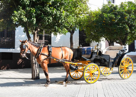 horse and carriage: Horse carriage in Seville, Andalusia, Spain