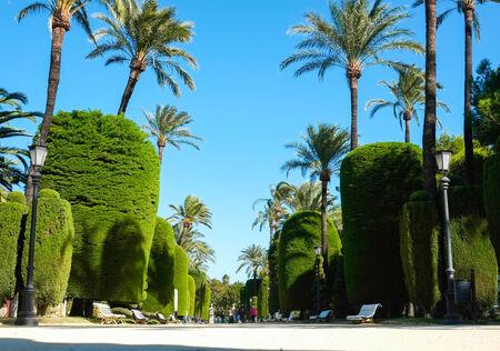 parque: Parque Genoves in Cadiz, Andalucia, Spain Stock Photo