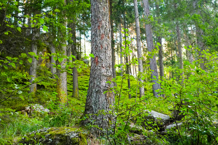 Forest in Aurina valley, South Tirol, Italy Stock Photo