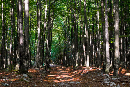 vegatation: Footpath in a forest in Slovenia