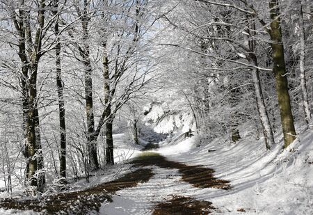 appennino: Trail in snowy forest, passo del Lagastrello, Tuscany, Italy