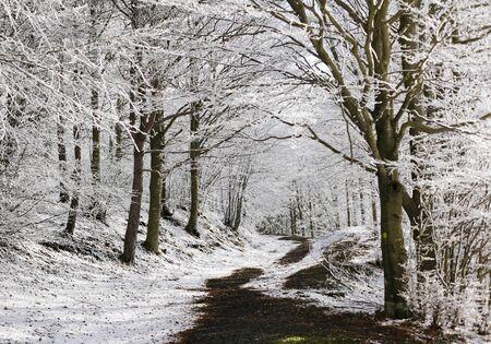 appennino: Trail in snowy forest, passo del Lagastrello, Tuscany, Italy