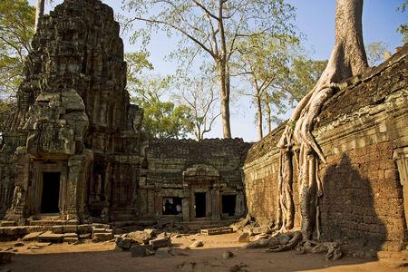raider: Ta Prohm temple in Angkor; Siem Reap; Cambodia