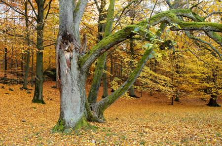 gothenburg: Forest in autumn in Gothenburg, Sweden Stock Photo