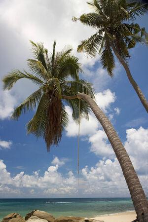 'koh samui': Beach in Koh Samui island, Thailand