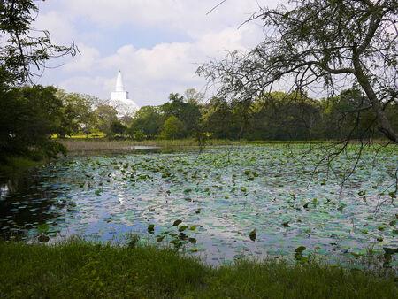 anuradhapura: Pond in Anuradhapura, Sri Lanka