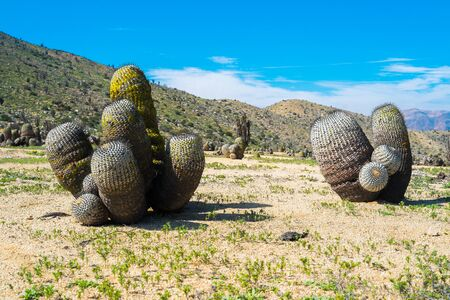 azucar: Deserted landscape with cactus in Parque Nacional Pan de Azucar, Chile
