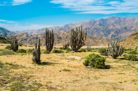 Verlassene Landschaft mit Kaktus im Parque Nacional Pan de Azucar, Chile