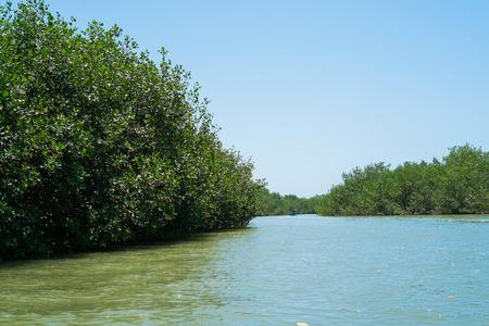 pizarro: Mangrovias in Puerto Pizarro, Tumbes, Peru Stock Photo