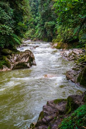 zamora: River in Podocarpus National Park near Zamora, Ecuador