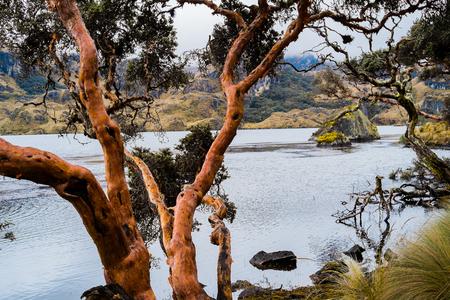 cuenca: Landscape in Cajas National Park, Cuenca, Ecuador