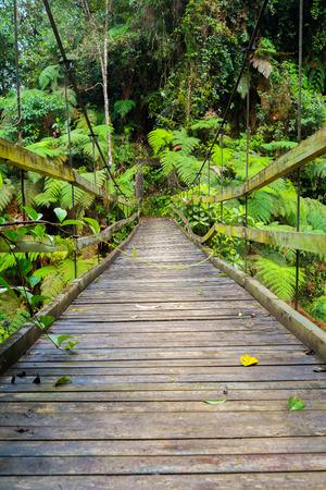 zamora: Suspension bridge in Podocarpus National Park near Zamora, Ecuador