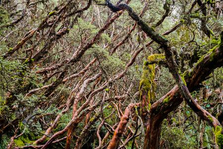 cuenca: Forest in Cajas National Park, Cuenca, Ecuador