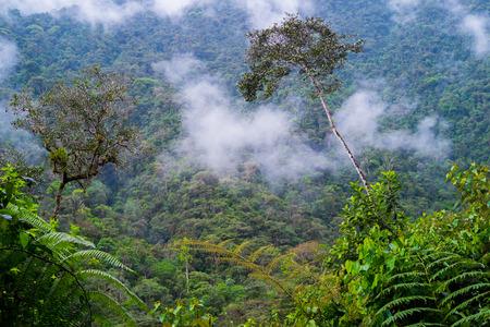 zamora: Podocarpus National Park near Zamora, Ecuador Stock Photo