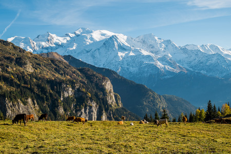 blanc: View of Mont Blanc from Pleine Joux, Chamonix, France