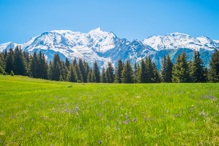 View of Mont Blanc in summer from Les Prarion, Les Houches, France Standard-Bild