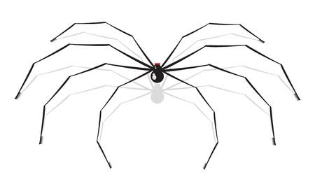 animal leg: Ilustraci�n vectorial de gran ara�a, aislado en fondo blanco