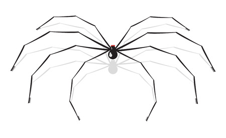 animal leg: Vector illustration of big spider, isolated on white background