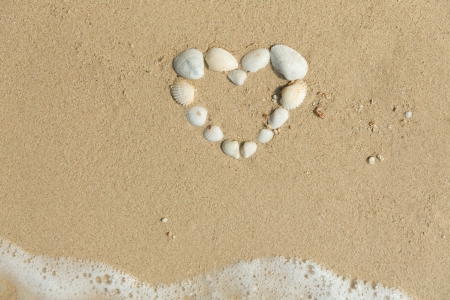 Sea shells forming heart photo