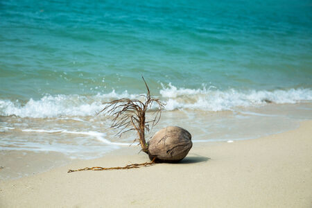 Coconut on the beach, white sand and blue sea background  photo