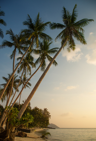 Beautiful tropical beach with palm trees in the evening  photo