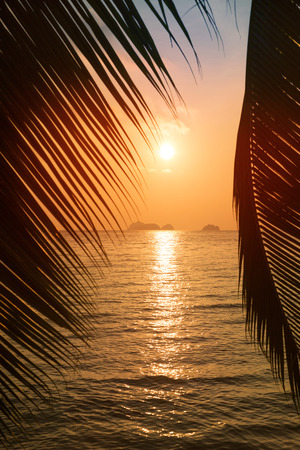 Tropical beach with palm leaf silhouette on sunset  photo