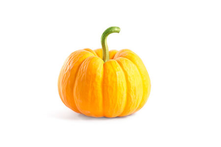 Decorative orange pumpkin, isolated on white background  photo