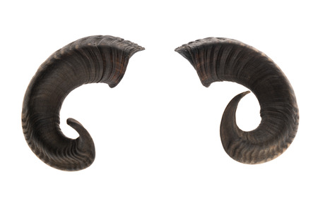 Pair of ram horns, isolated on white background Stock Photo