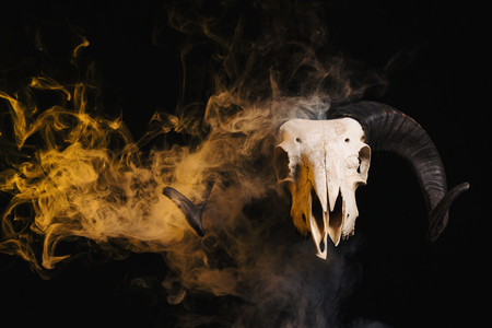 Ram skull with horns and yellow smoke, Halloween theme