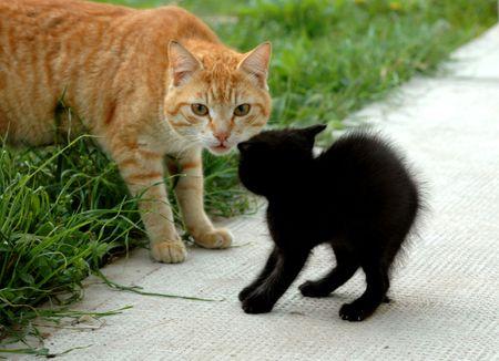 gato poco miedo