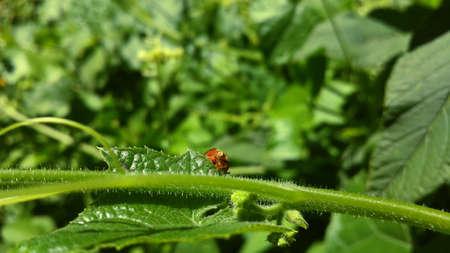 a small insect peeking between the leaves Фото со стока