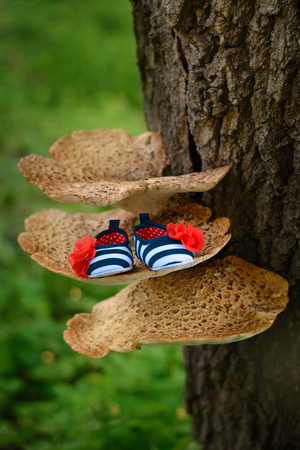 The shoe of the newborn on a large mushroom on a tree