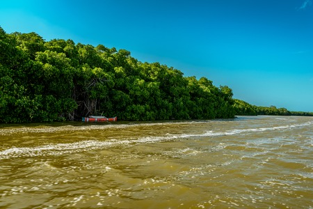 View of mangrove and lake in Celestun, Mexico