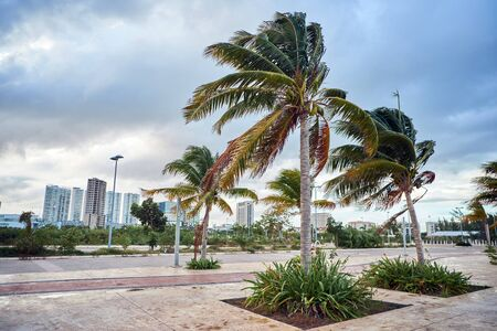 Cancun city landscape with palm trees in windy weather
