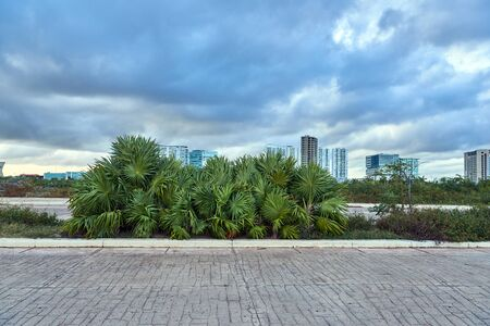 Cancun city landscape with palm trees in windy weather Stock fotó