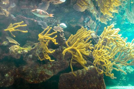 Coral reef and its inhabitants in a natural habitat. Mexico.