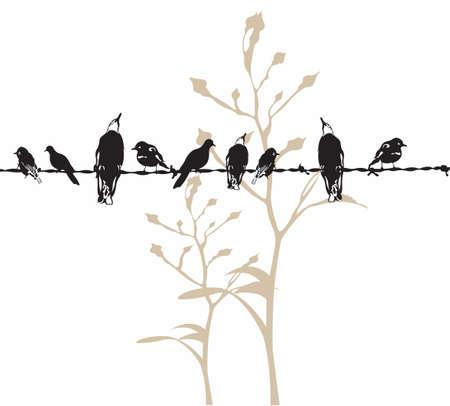 Ilustración de las aves en un hilo Ilustración de vector