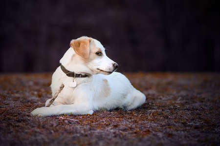 Cute puppy white dog walking on park, relax pet, collie mix, dog looking, animal funny