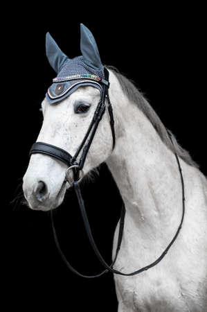 Beautiful helathy stunning white horse stallion mare on black background. 版權商用圖片