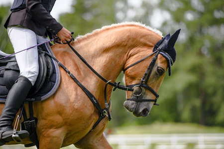 Portrait of horse in horse show, nice bokeh.