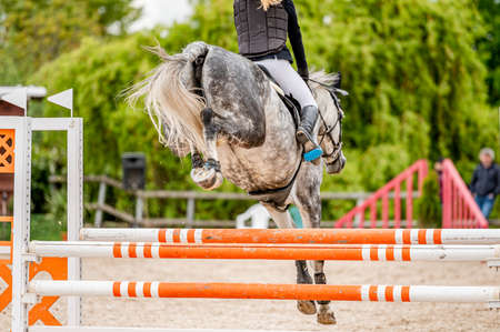 Detail of horse from showjumping competition. Imagens