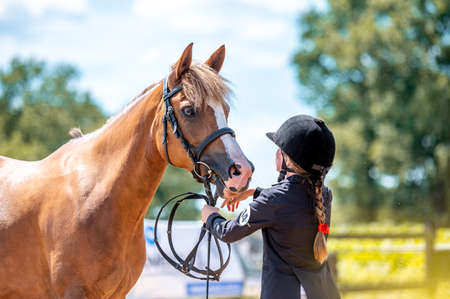 Horse show in hand, portrait of beautiful healthy horse.