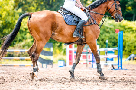 Detail of horse during horse showjumping competition. Close up photo of horse accesories, saddle, bridle, stirrups. Stock Photo