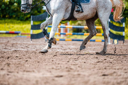 Detail of horse during horse showjumping competition. Close up photo of horse accesories, saddle, bridle, stirrups.