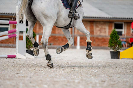 Detail of horse hooves from showjumping competition.