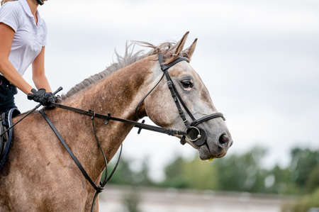 Detail of horse from showjumping competition.