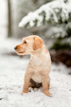 Adorable crossbreed mutt dog in snowy forest in winter. Healthy happy dog.