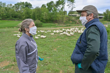 Farmers worried during avian flu wearing masks and protective gloves