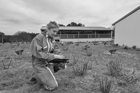 Female farmer analyzing the growth of her chicken breeding on her tablet Archivio Fotografico